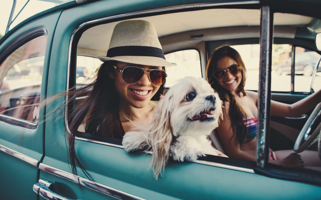 Orbitz Travel Survey Shows Three-in-Four Vacationers are Planning a Road Trip for Their Pets this Summer